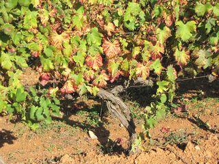 Corse oct 2010 083
