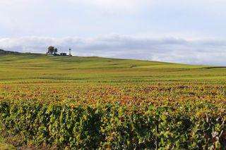 Vignes phare verzenay