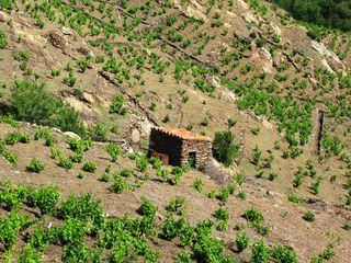 Roussillon 030