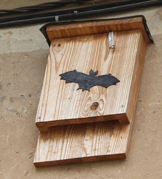 Abri pipistrelles