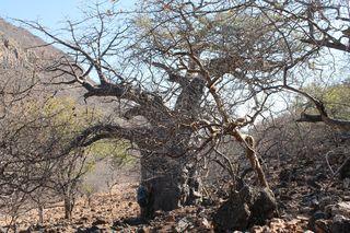 197 J7 pays Himba