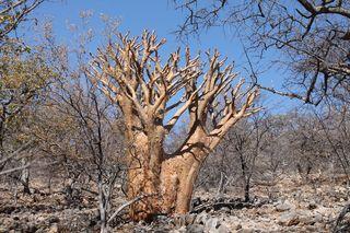 200 J7 pays Himba