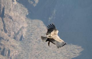 156 Croix du Condor