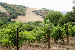 Mine de vin vignes 1