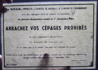 Mine de vin arrachez cépages prohibés
