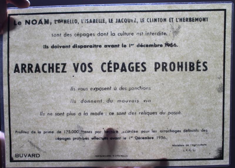 Mine de vin arrachez cépages prohibés