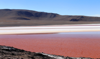 Chili 229 - Bolivie laguna colorada
