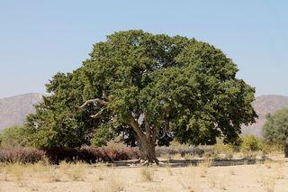 159 J6 pays Himba