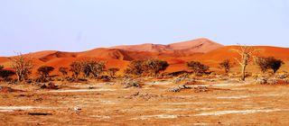 384 J15 désert du Namib