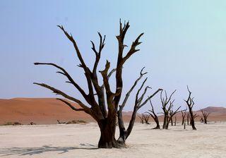 405 J15 désert du Namib Sesriem