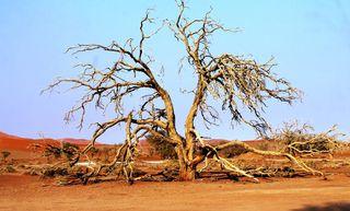 386 J15 désert du Namib