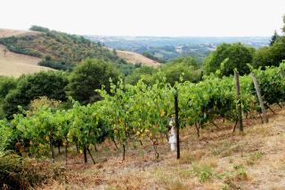 Mine de vin vignes 2