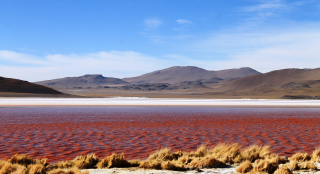 Chili 233 - Bolivie laguna colorada